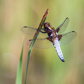 The Dragonfly by Stephen Jenkins