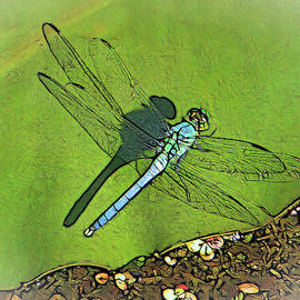 The Dragonfly's Shadow by Dennis Lundell