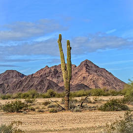 The Edge Of Desert by Robert Bales