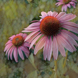 The Ethereal Echinacea by Dennis Lundell