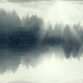 The Floating Forest by Dirk Wuestenhagen