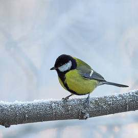 Jouko Lehto - The Great Great Winter Tit