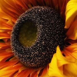 The Happy Flower  by Marcia Breznay