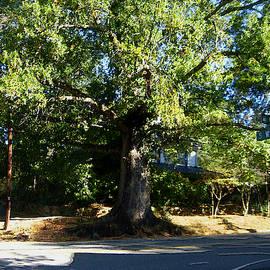 The Hillsborough Tree by David Zimmerman