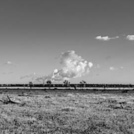 The  Joshua Tree Plains - Black And White by Peter Tellone