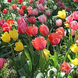 The Joy of Spring - Festival of Tulips by Dora Sofia Caputo Photographic Design and Fine Art