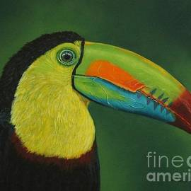 The Keel-Billed Toucan by Louise Williams