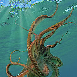 The Kraken by James Roemmling