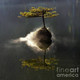 The Little Tree On Fairy Lake 4 by Bob Christopher