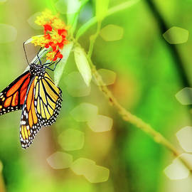 The Magnificent Monarch by Kay Brewer