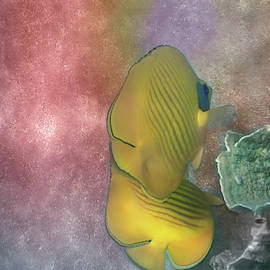 The Masked Butterflyfish Colorfully by Johanna Hurmerinta