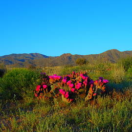 Color Of The Desert In Spring by James Welch