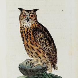 Artistic Global - The Owl