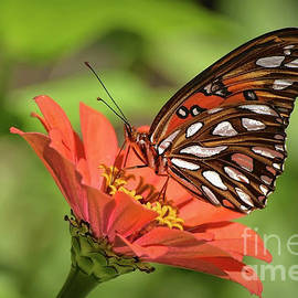 The Painted Lady by Kathy Baccari