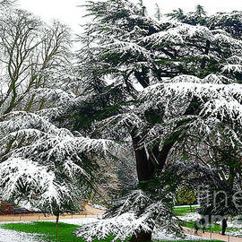 The Park Of Buttes-chaumont  In  Winter. by Alexander Vinogradov