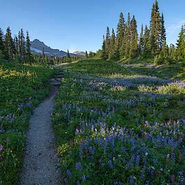 The path to joy by Lynn Hopwood