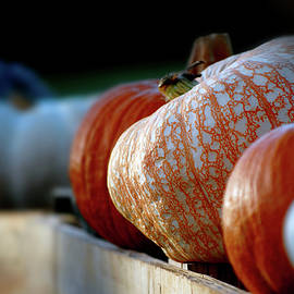 The Pumpkin Patch by Perry Correll