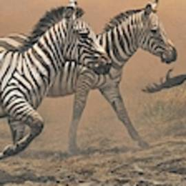 The Race - Zebras by Alan M Hunt