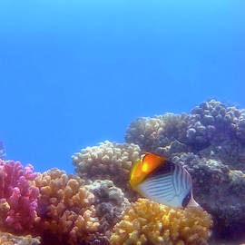 The Red Sea Takes Your Breath Away With Its Beauty by Johanna Hurmerinta