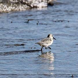The Sandpiper by William Rogers