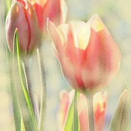 The Scent of Tulips by Angela Davies
