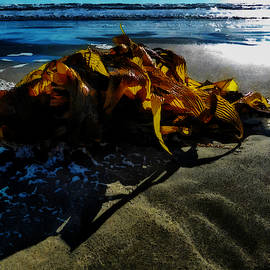 The Seaweed at Dawn  by Steve Taylor