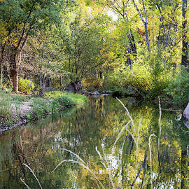 The Shady Spot by Cathy Franklin