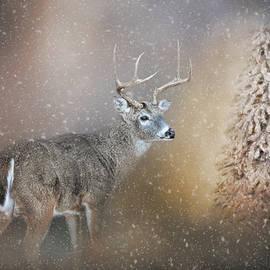 The Silence Of Christmas Morning by Jai Johnson
