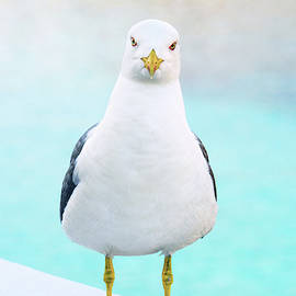 The Stare of the Seagull by Jonny Jelinek