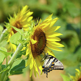 The Sunflower, The Butterfly and The Grasshopper by Sarah Hanley