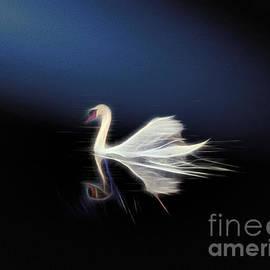 The Swan by Leigh Kemp