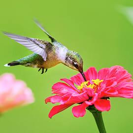 Hummingbird Sweet Spot by Christina Rollo