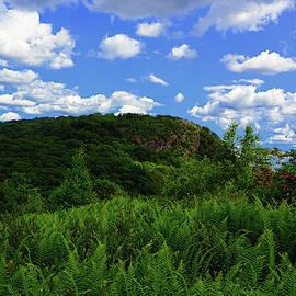 The Timp And Fern Meadow 3 by Raymond Salani III