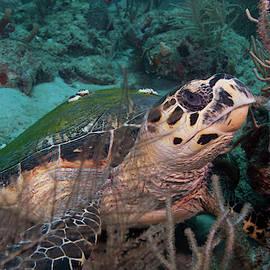 The Turtles Eye by Sandra Edwards