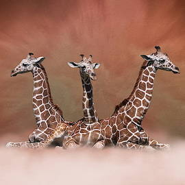 Debi Dalio - The Watchers - Three Giraffes