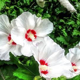 The White Hibiscus  by Debra Lynch