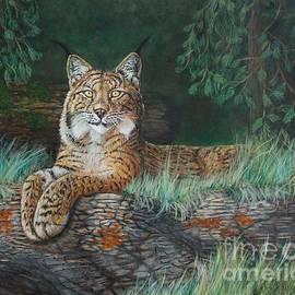 The Wild Cat  by Bob Williams