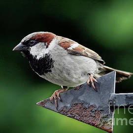 This Way Sparrow by Terri Waters