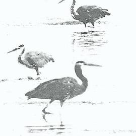 Three Blue Herons by Barbara Henry