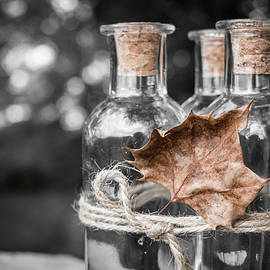 Three Bottles And A Leaf by Jim Love