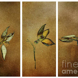 Three dried beauties by Flo Photography