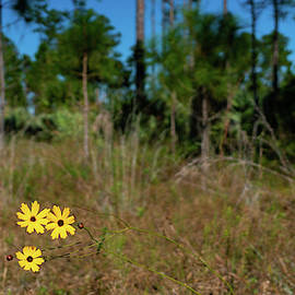 Three Flowers Royal Palm Beach Pines Nature Area by Lawrence S Richardson Jr