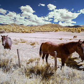 Three Horses In Colorado by Jon Glaser