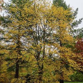 Three trees by Jouko Lehto
