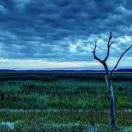 Tidal Marsh Views by Phill Doherty