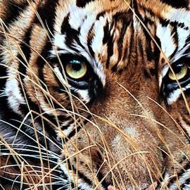 Tiger Eyes By Alan M Hunt by Alan M Hunt