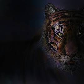 Tiger In The Dark by Darren Cannell
