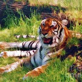 Tiger - In The - Shade by D Hackett