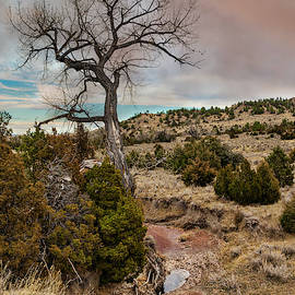 Timber Creek Ranch by Lorraine Baum