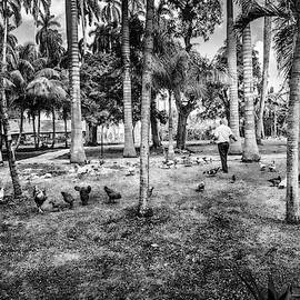Time To Feed The Chickens Black And White by Sharon Popek